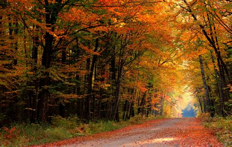 road autumn forest 3922 2488 forest photography miriadna