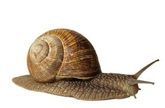 Snail White Kemasan Sle 10ml4 animals name in and ज नवर क न म list of animals