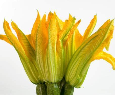 fiori di zucchina mini flan di fiori di zucchina la ricetta per preparare
