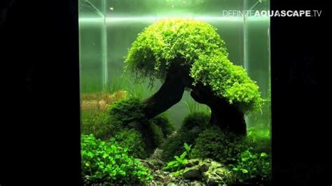 aquascape inspiration inspirational aquascape 11 apsa