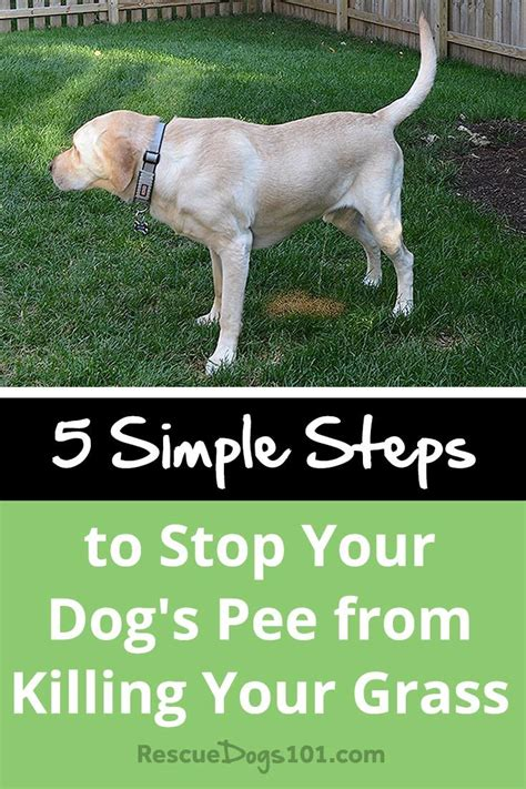 best way to stop dog from peeing in house best 25 dog pee ideas on pinterest dog pee smell