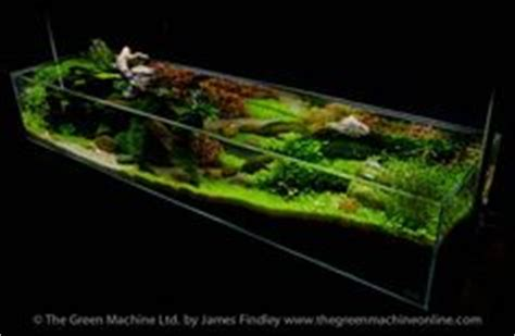 green machine aquascape aquarium aqua and planted aquarium on pinterest