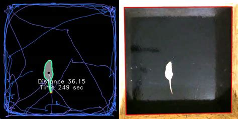 open tester open field test animal tracking with opencv