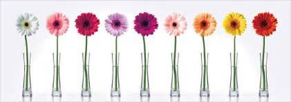 Art Deco Flower Vases Conseils Pour L Entretien D Un Gerbera Qrmaison