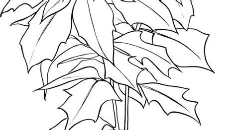 poinsettia leaves coloring pages flower poinsettia coloring pages