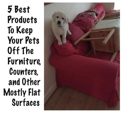 How To Keep Cats Sofa by 5 Best Products To Keep Your Pets Furniture Counters