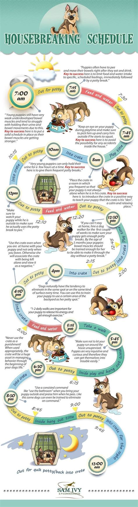 puppy schedule 25 best ideas about puppy schedule on puppy care puppy schedule