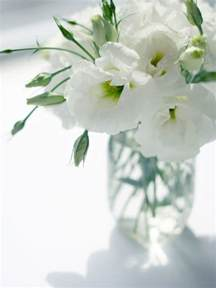 What Is The Meaning Of The Lily Flower - lisianthus or eustoma funny how flowers do that