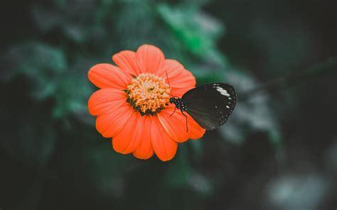 wallpaper black butterfly black butterfly wallpaper background hd wallpaper background