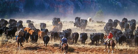 how to a working for cattle the hideout lodge guest ranch dude ranch guest ranch shell wyoming