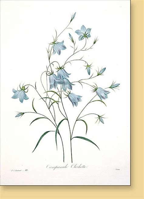bluebell tattoo designs 1000 images about pretty ink on watercolour