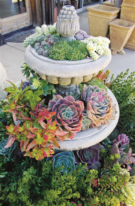 plant ideas for backyard 50 best succulent garden ideas for 2018