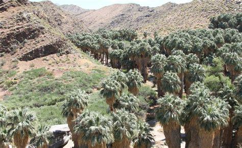 Travelmarx Indian Canyons Moorten Botanical Garden And Moorten Botanical Garden Palm Springs