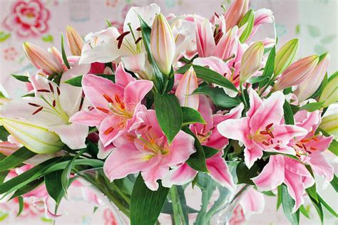 most fragrant lilies