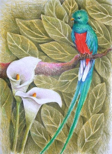 watercolor quetzal tattoo quetzal by jubamo ink in 2019 quetzal