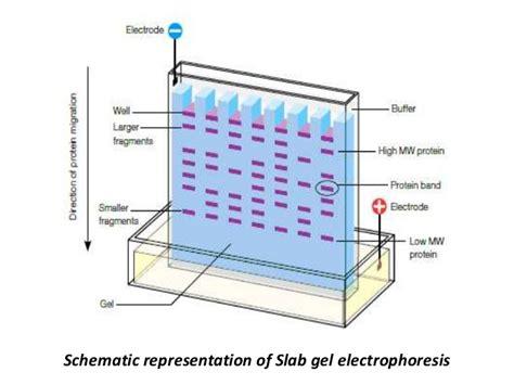 diagram of electrophoresis electrophoresis