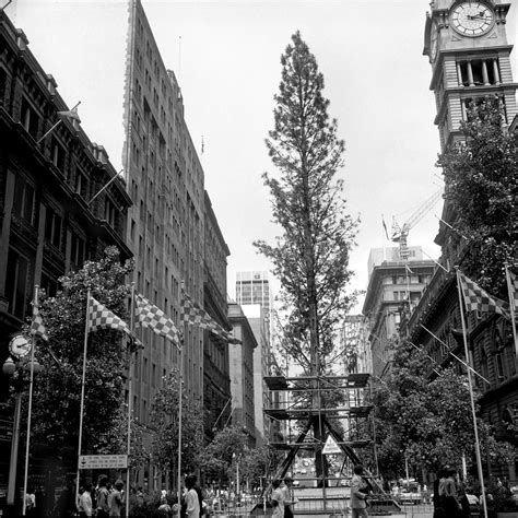 100 christmas tree delivery sydney the most over
