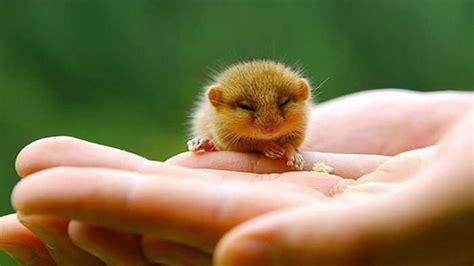 Hamster Maxy Hamsters