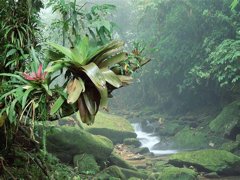 Plants From The Tropical Rainforest - rainforest webquest march 2011