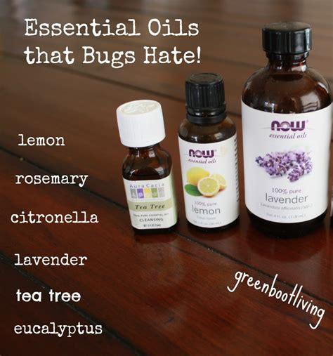 scents that repel bed bugs gardening trending steem