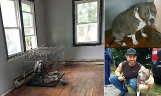 guardians betrayal what happens seven years after adoption books guardians of rescue save pit bulls who were left abandoned