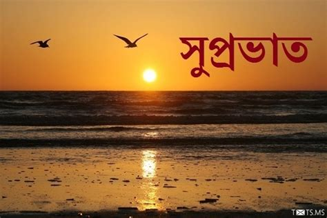bengali good morning sms bengali good morning sms wishes images for facebook