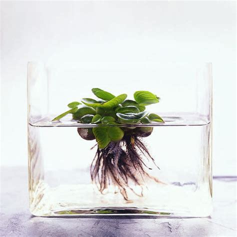 Plants That Grow In Water Vases by Pond In Glass
