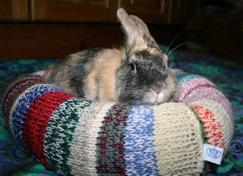 bunny bed 1000 images about rabbit home accessories great ideas on pinterest rabbit hutches