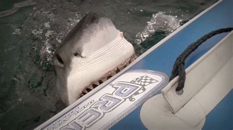shark attack great white attacks boat youtube - Shark Bites Boat