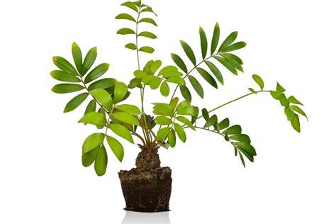 piante da interni poca luce piante da interno con poca luce piante da appartamento