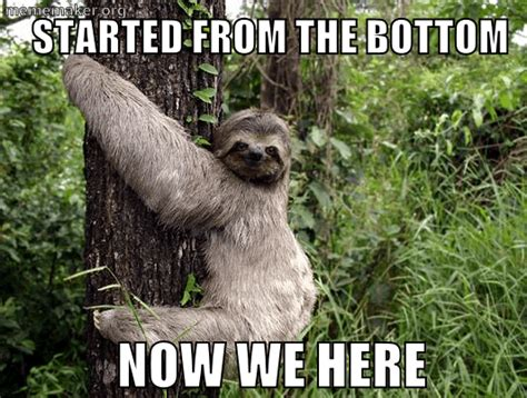 Make A Sloth Meme - sloth 171 meme maker make a meme online