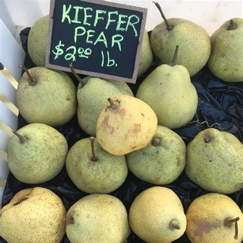 kieffer pears information recipes  facts