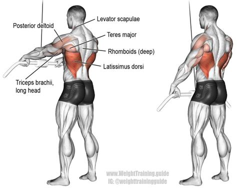 best 25 latissimus dorsi exercises ideas on
