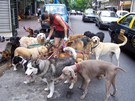 dog sitter jobs 10 summer jobs that aren t cool in the middle east