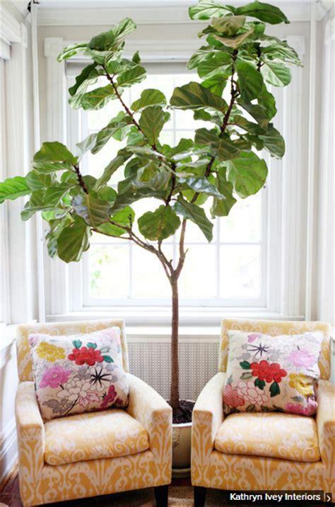 indoor plants indirect sunlight the 6 best indoor plants for brisbane homes seed