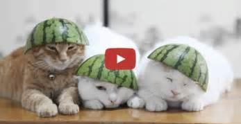 Pics photos katzenvideo lustig lustiges video mit katze zum