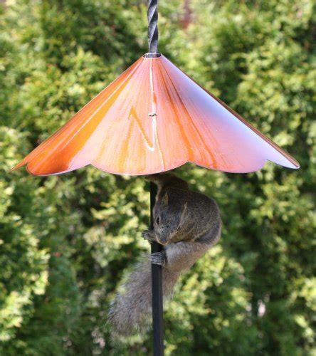 squirrel baffle unique birdhouse boutique
