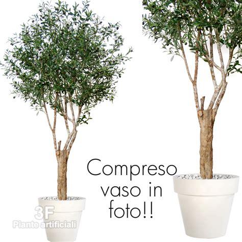 ulivo in vaso prezzo prezzi piante di ulivo vivai mediplants a cosanto di