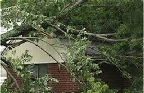 neighbour s tree fell on who is responsible when your tree falls on your neighbor s property allarea roofing