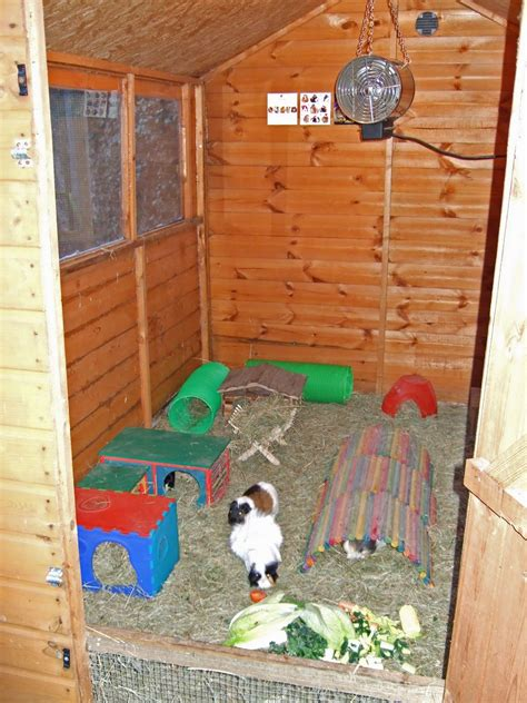 Do Pigs Shed by Undercover Guinea Pigs Crib