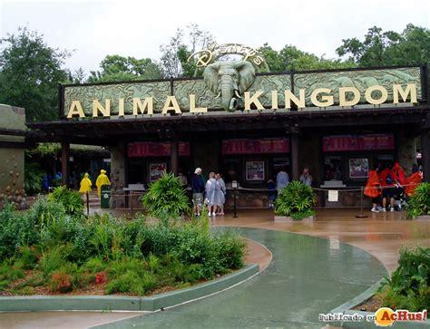 imagenes animal kingdom imagenes de am 233 rica del norte gt disney animal kingdom