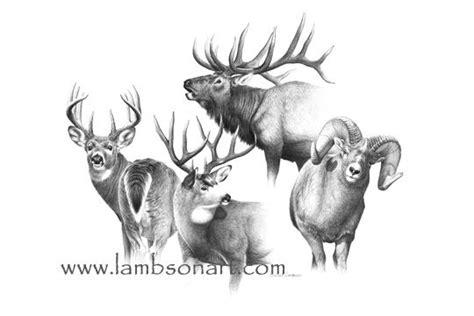 mule deer tattoo designs sheep elk mule deer and whitetail an explosion of