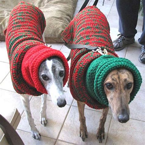Jumper Natal dogs in jumpers