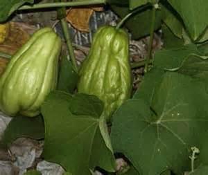 How To Make A Vegetable Trellis Perennial Plants