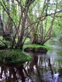 file alder trees beaulieu river fawley ford jpg