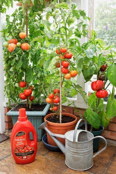 piante da orto in vaso 17 migliori idee su coltivare carote su