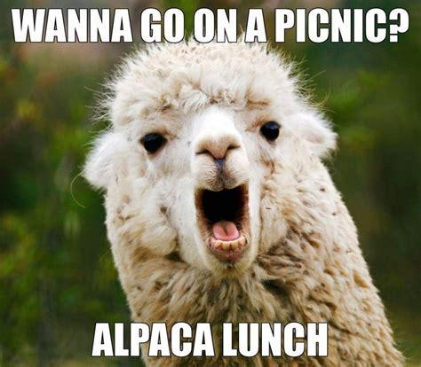 Llama Memes - best 25 llama meme ideas on pinterest bromas de llamas