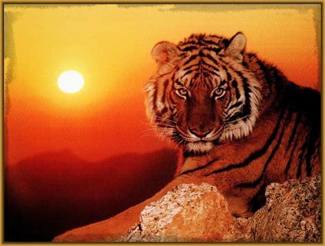 imagenes navideñas las mejores las mejores fotos de tigres del mundo archivos imagenes