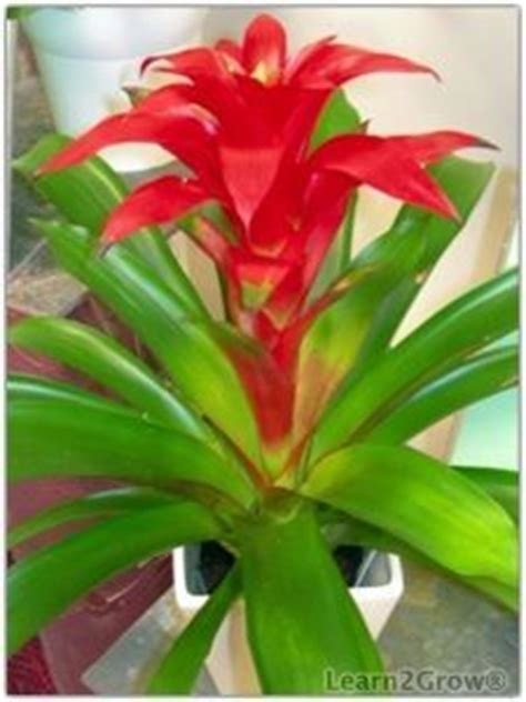 shade loving gardening bromeliads colorful succulents