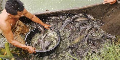 Jual Bibit Ikan Lele Jakarta Timur jual ikan lele di batu